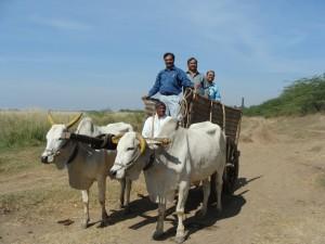 Indijas vīrieši. Attēls no http://pixabay.com/en/bullock-cart-raichur-karnataka-175247/