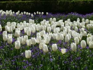 Attēls no http://pixabay.com/en/flower-garden-tulips-gardening-109891/